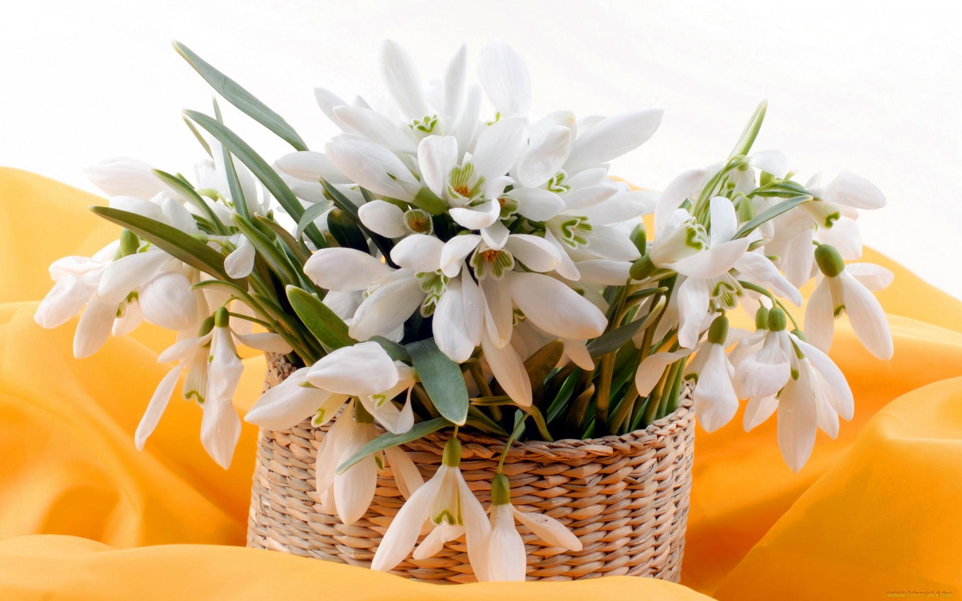 Открытки с днем рождения весенние цветы середине располагается